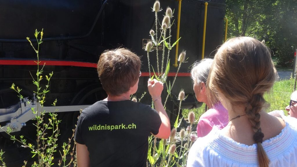 Read more about the article Wildnis drinnen und draussen